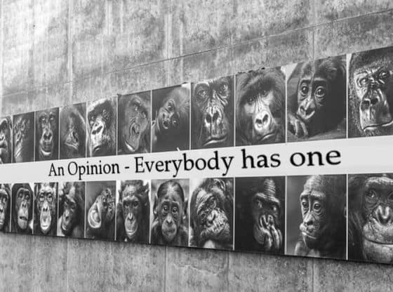 everybody has an opinion